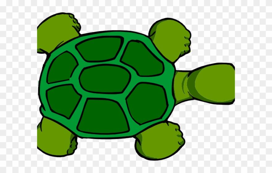 Shell Clipart Tortoise Shell.