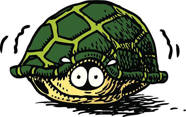 Turtle in shell clipart 7 » Clipart Portal.