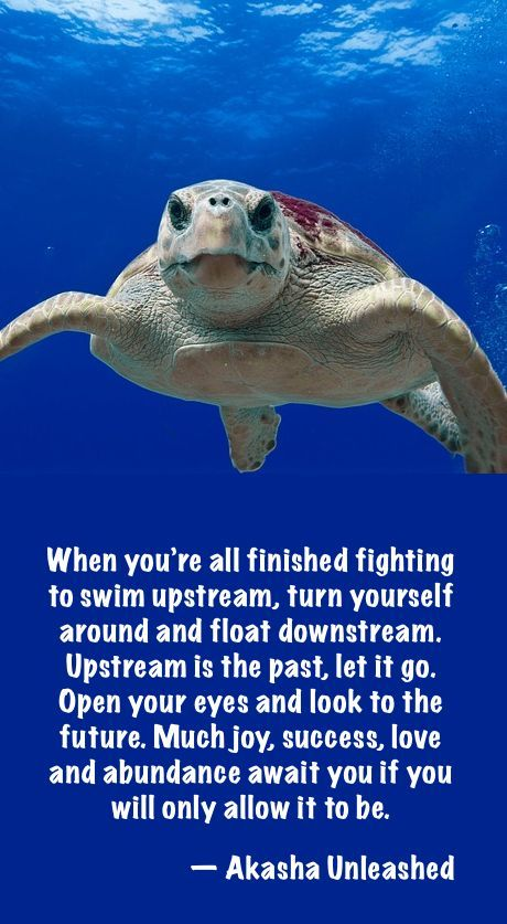 25+ best Turtle Quotes on Pinterest.