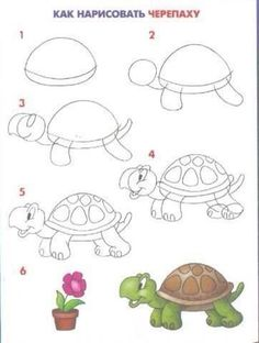 Draw turtle circle ….