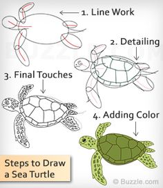You'd certainly want to know how to draw a turtle if you'd.