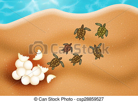 Clip Art of sea turtle eggs.