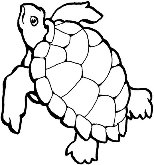 Sea Turtle Cartoon Log In ClipArt Best ClipArt Best inside.