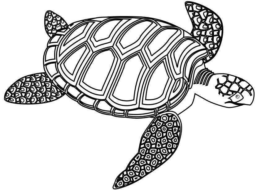 turtle outline clipart black and white 20 free Cliparts ...