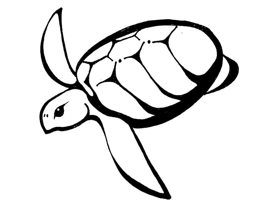 Turtle Outline.