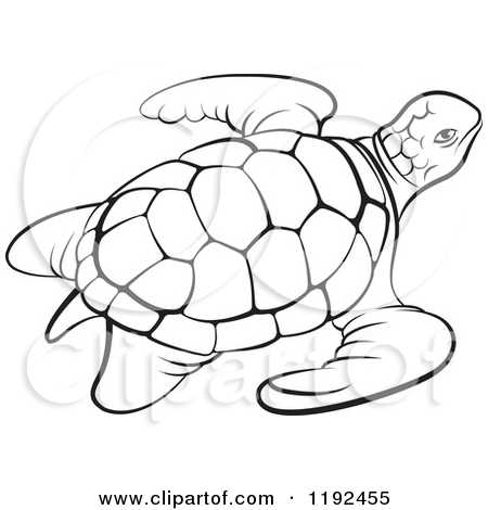Sea Turtle Outline Clipart.