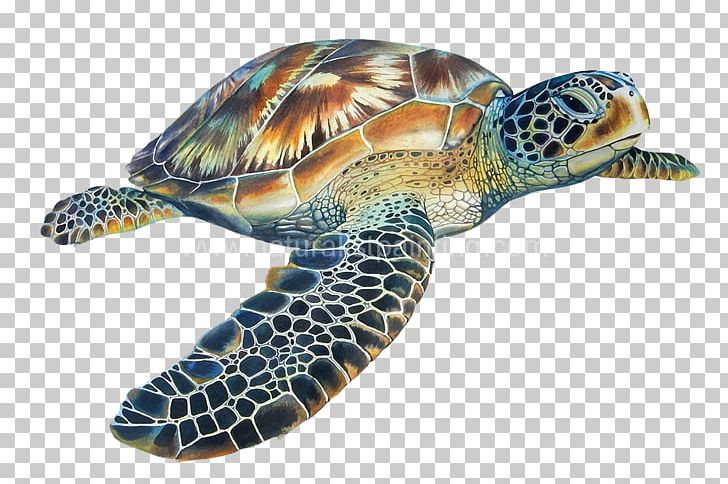 Loggerhead Sea Turtle Hawksbill Sea Turtle Tortoise PNG.