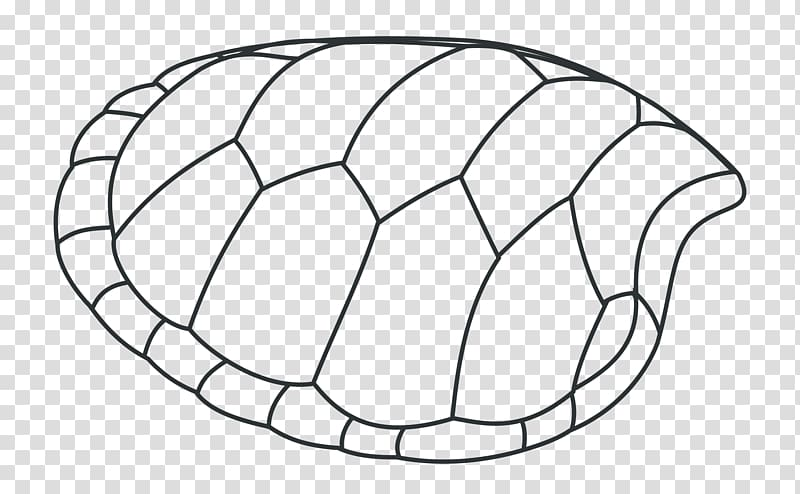 Turtle shell Drawing Tortoise , Green Shells transparent.