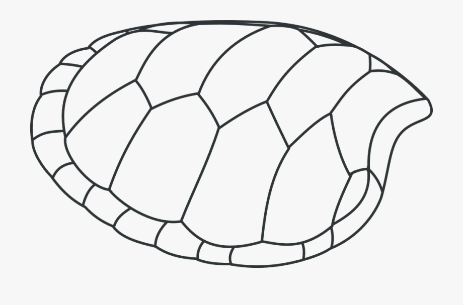 Turtle, Shell, Patterns, Black And White.