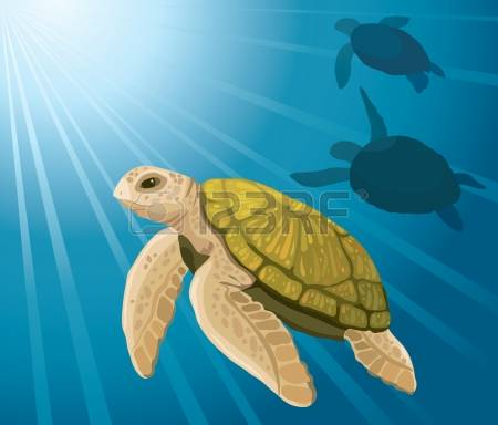6,489 Sea Turtle Stock Vector Illustration And Royalty Free Sea.