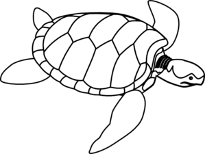 Swimming Turtle Clip Art at Clker.com.