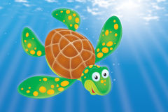 Loggerhead Sea Turtle Caretta Caretta Swimming Stock Illustrations.
