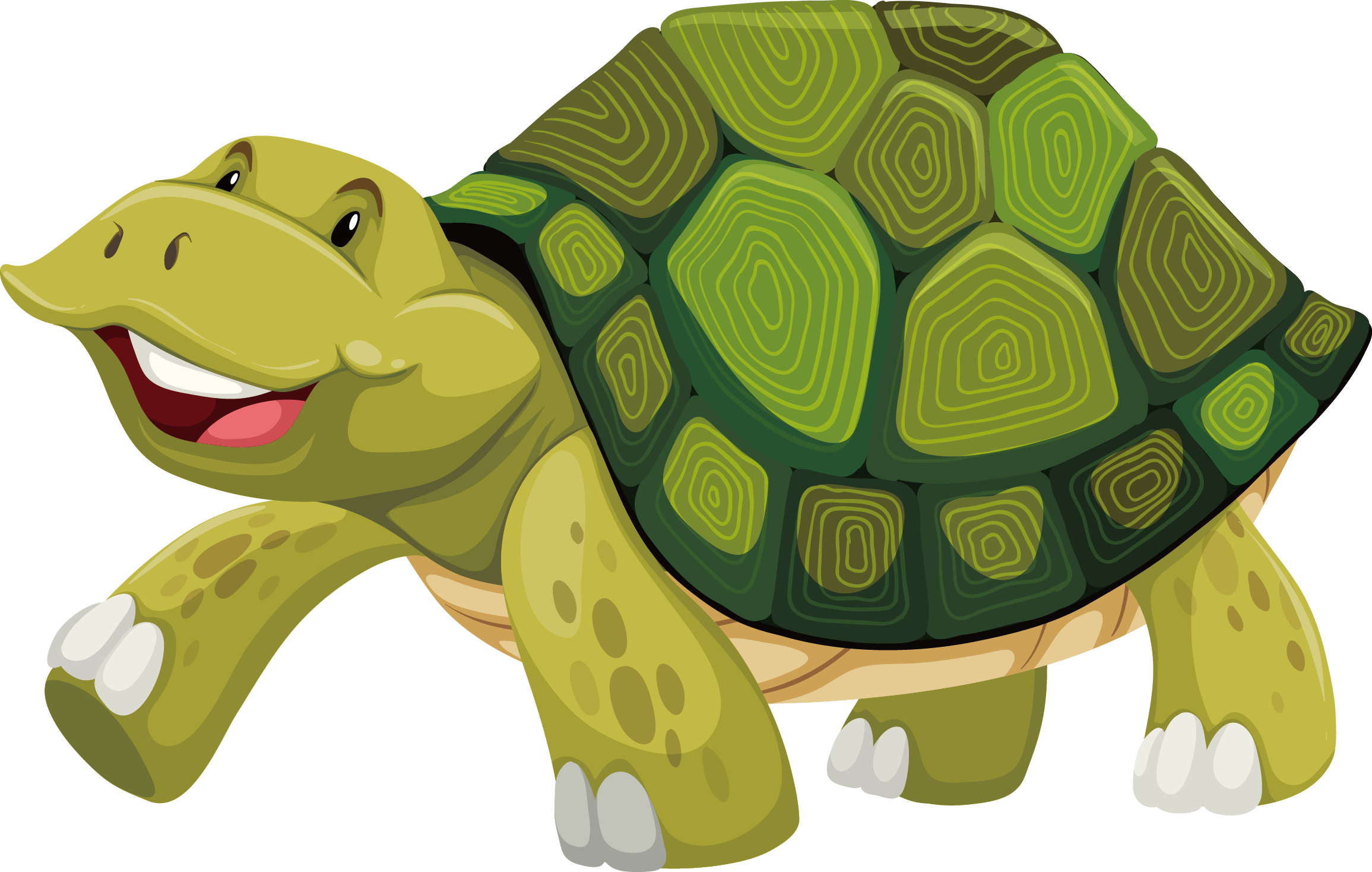 Turtle shell Stock photography Illustration.