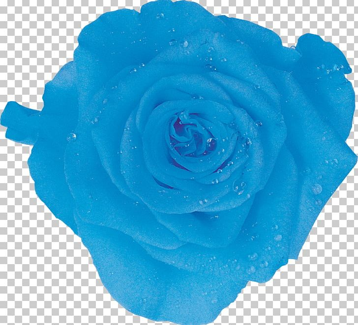 Ice Packs Garden Roses Amazon.com Cooler Blue Rose PNG.