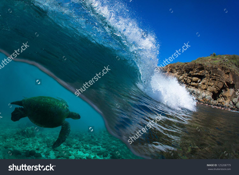 Blue Ocean Wave Breaking With Turtle Swiming Underwater Stock.