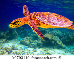 Turtle Images and Stock Photos. 25,573 turtle photography and.
