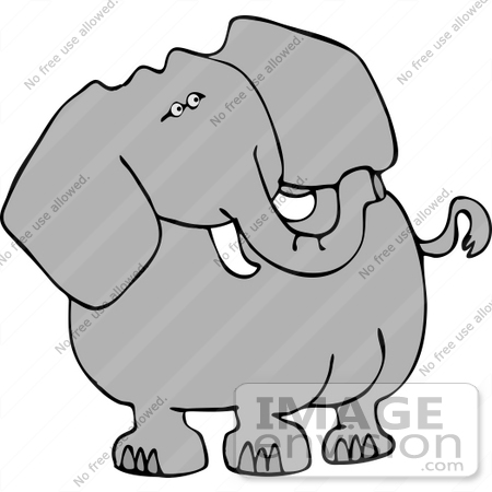 One Elephant With Tusks Clipart.
