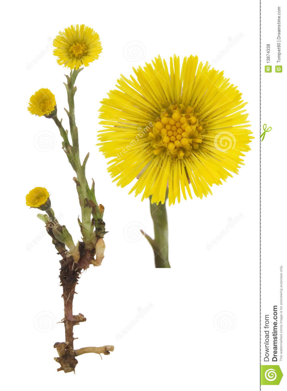 Coltsfoot Medical.