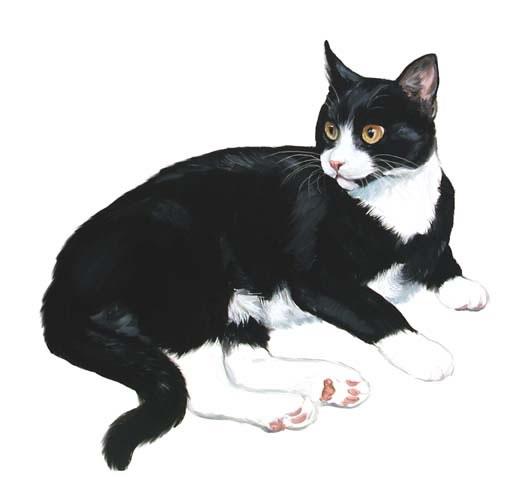 Tuxedo cat clipart.