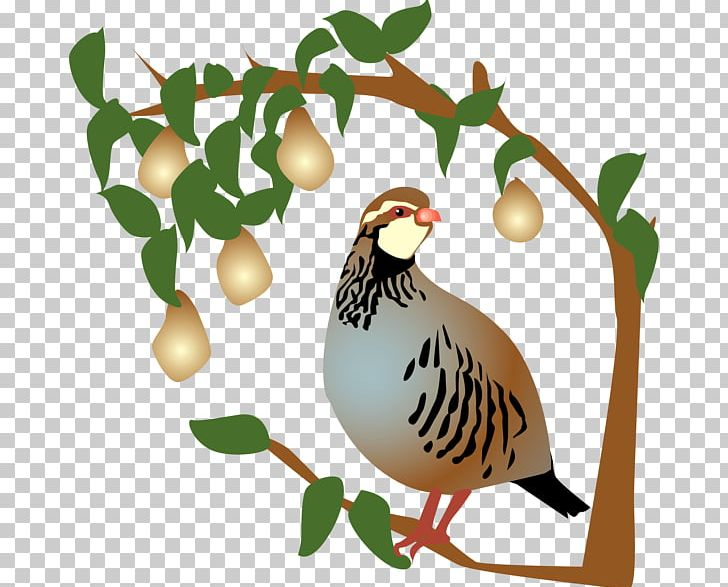 Partridge The Twelve Days Of Christmas Pear PNG, Clipart.
