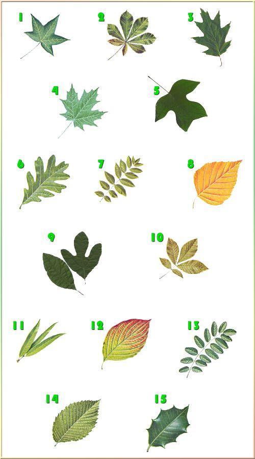 identifying trees.