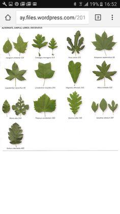 identify trees.