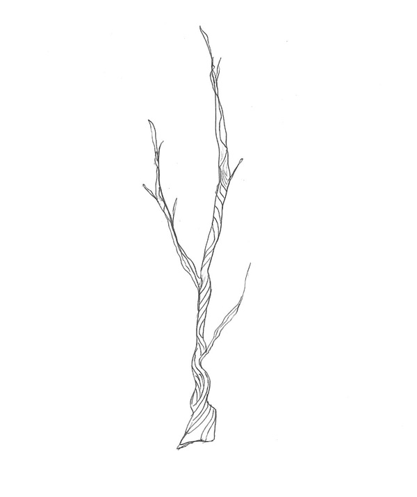 Twig Clipart; hand drawn dividers to decorate your blog or books.