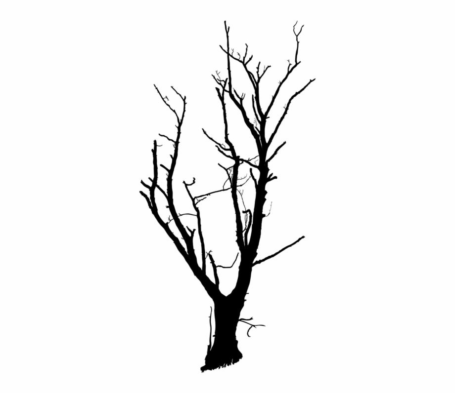 Twig Drawing Tree Limb Black And White Dead.