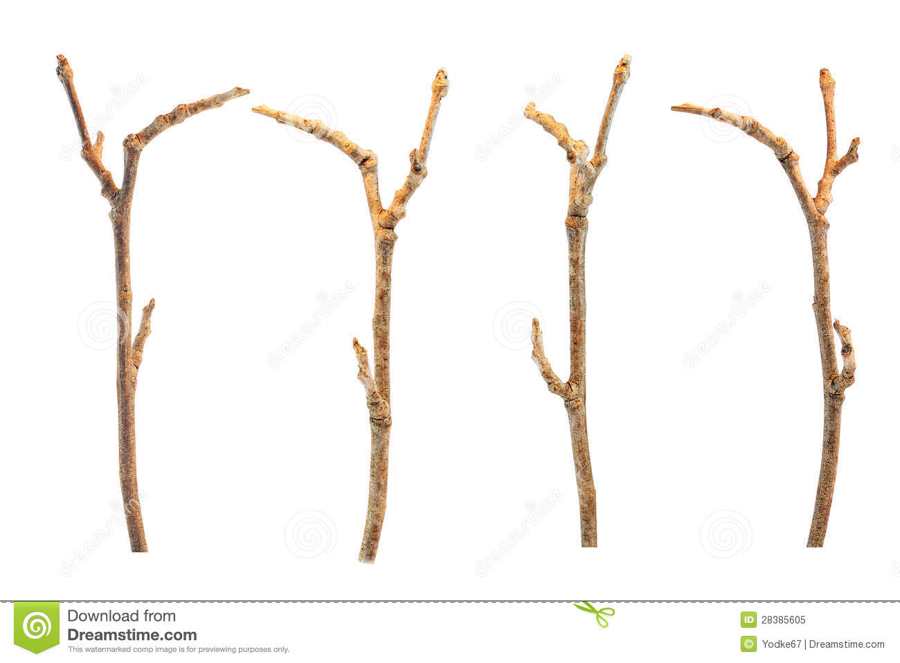Similiar Twig Clip Art Keywords.