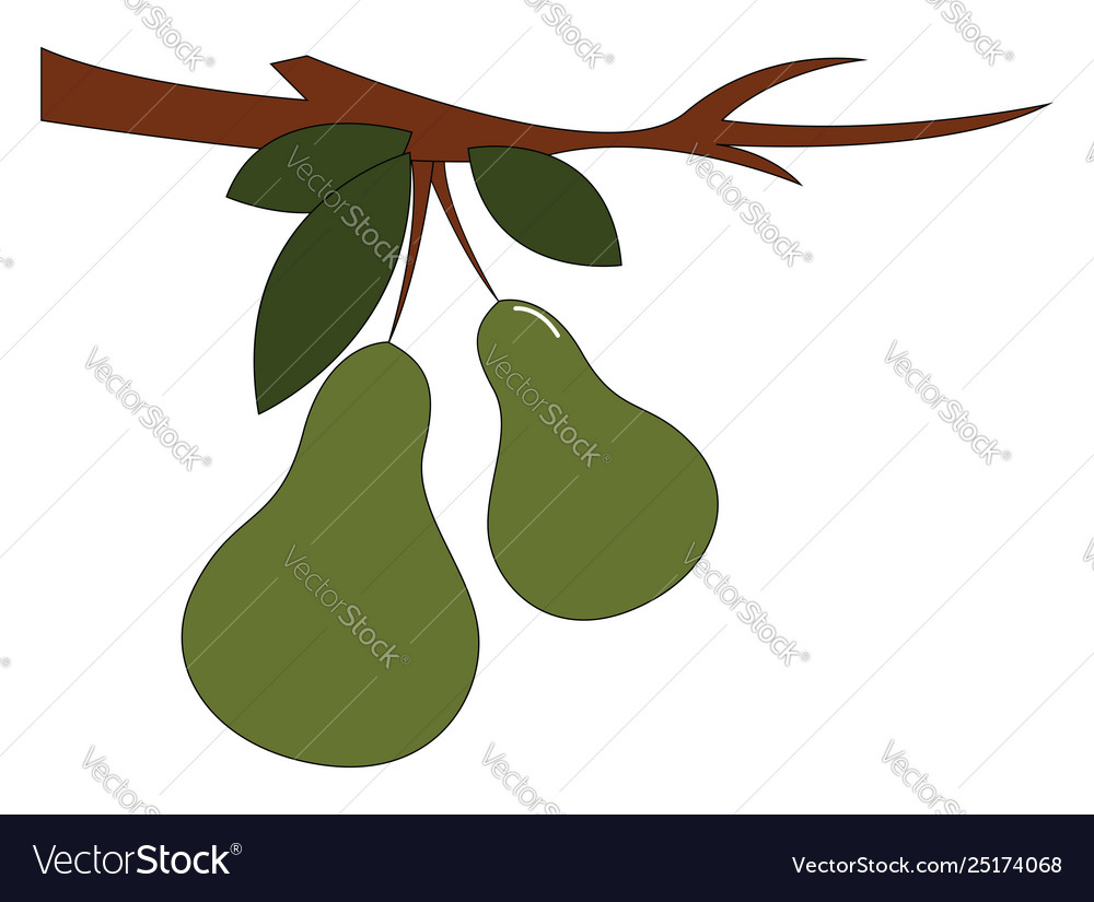 Clipart two pear fruits hanging on the.