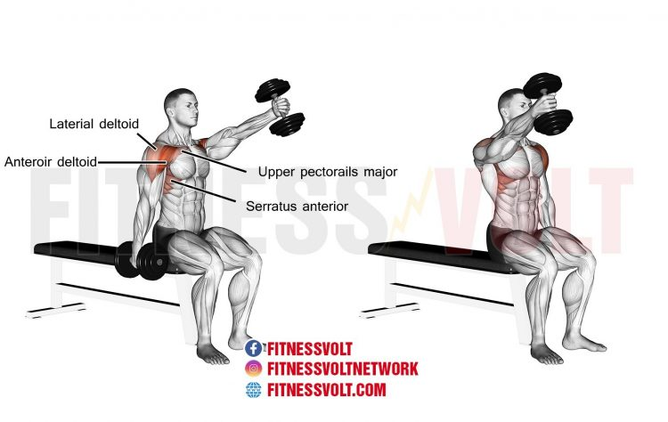 Seated Alternating Dumbbell Front Raise (Shoulders.