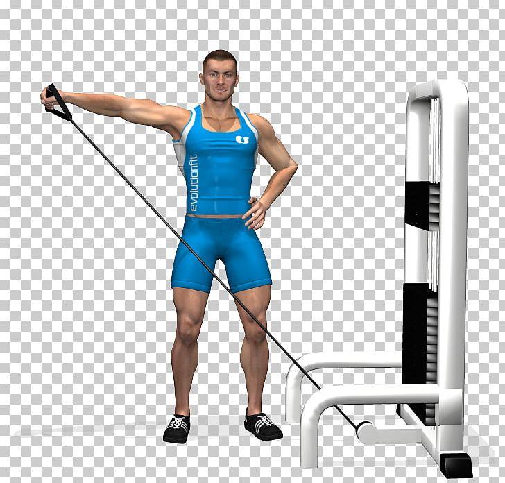 Deltoid Muscle Rear Delt Raise Physical Exercise Overhead.