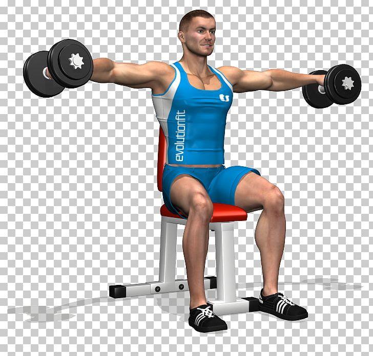 Triceps Brachii Muscle Dumbbell Deltoid Muscle Rear Delt.