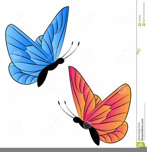 Two Butterflies Clipart.