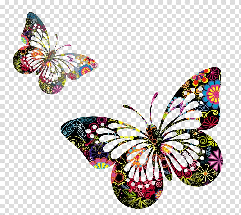 Two multicolored floral butterflies , Butterfly Drawing.