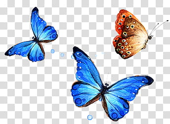 Files , two blue and brown butterflies transparent.