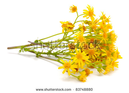 Yellow Field Of Flowers Stock Photos, Royalty.
