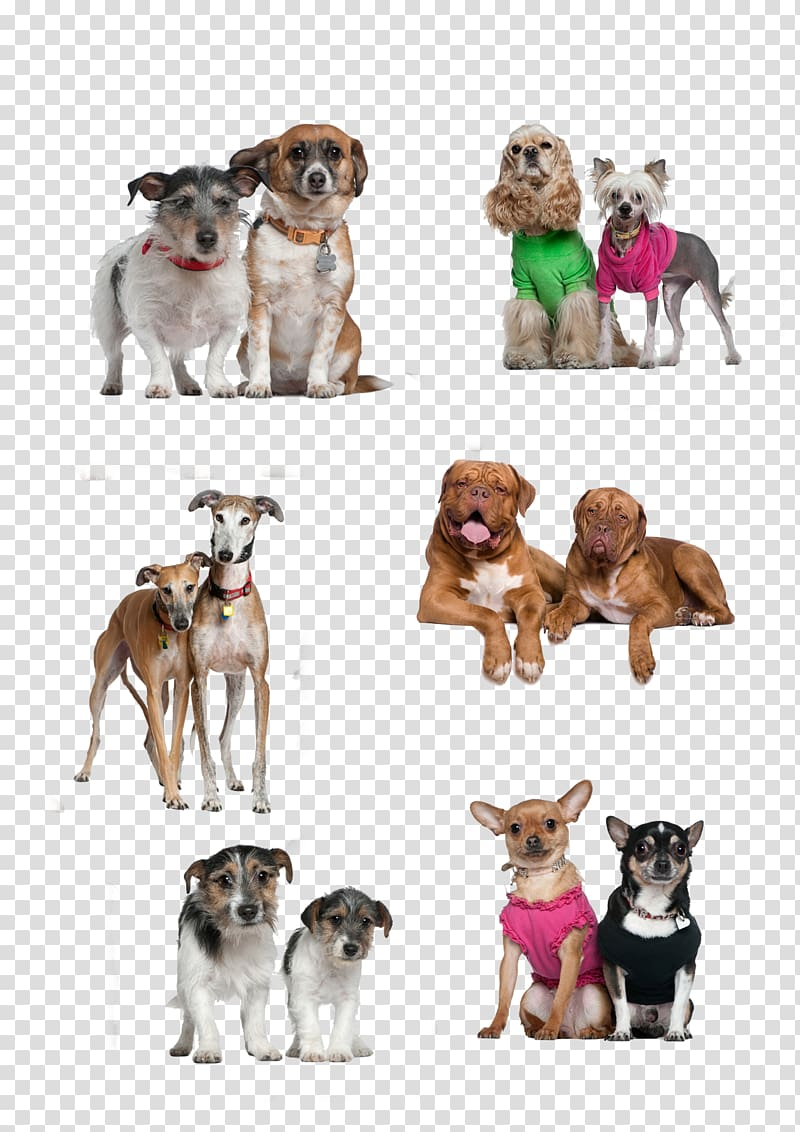 Dog breed Puppy Companion dog, Two dogs together transparent.