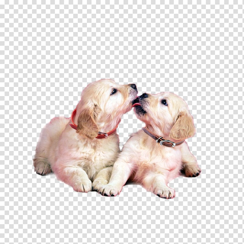 Blog Friendship Morning Love, Only two dogs transparent.