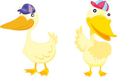 Two Ducks Stock Illustrations.