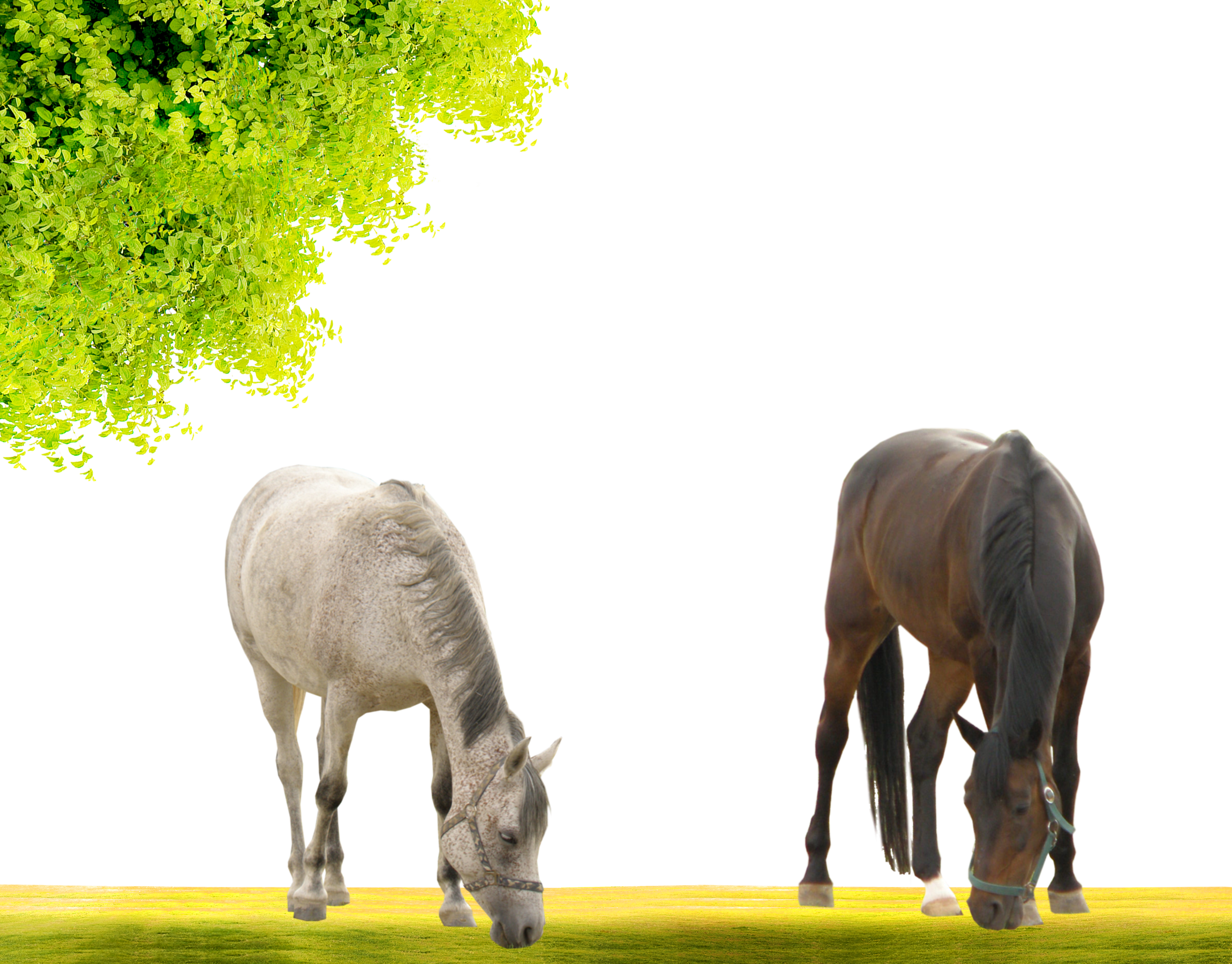 Mustang Stallion Mare Pony.