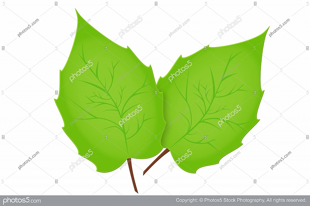 Two Leaves Clipart.