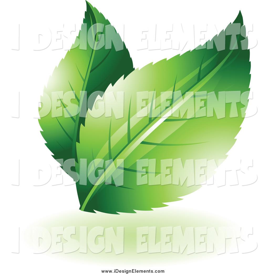 Similiar Two Leaves Keywords.