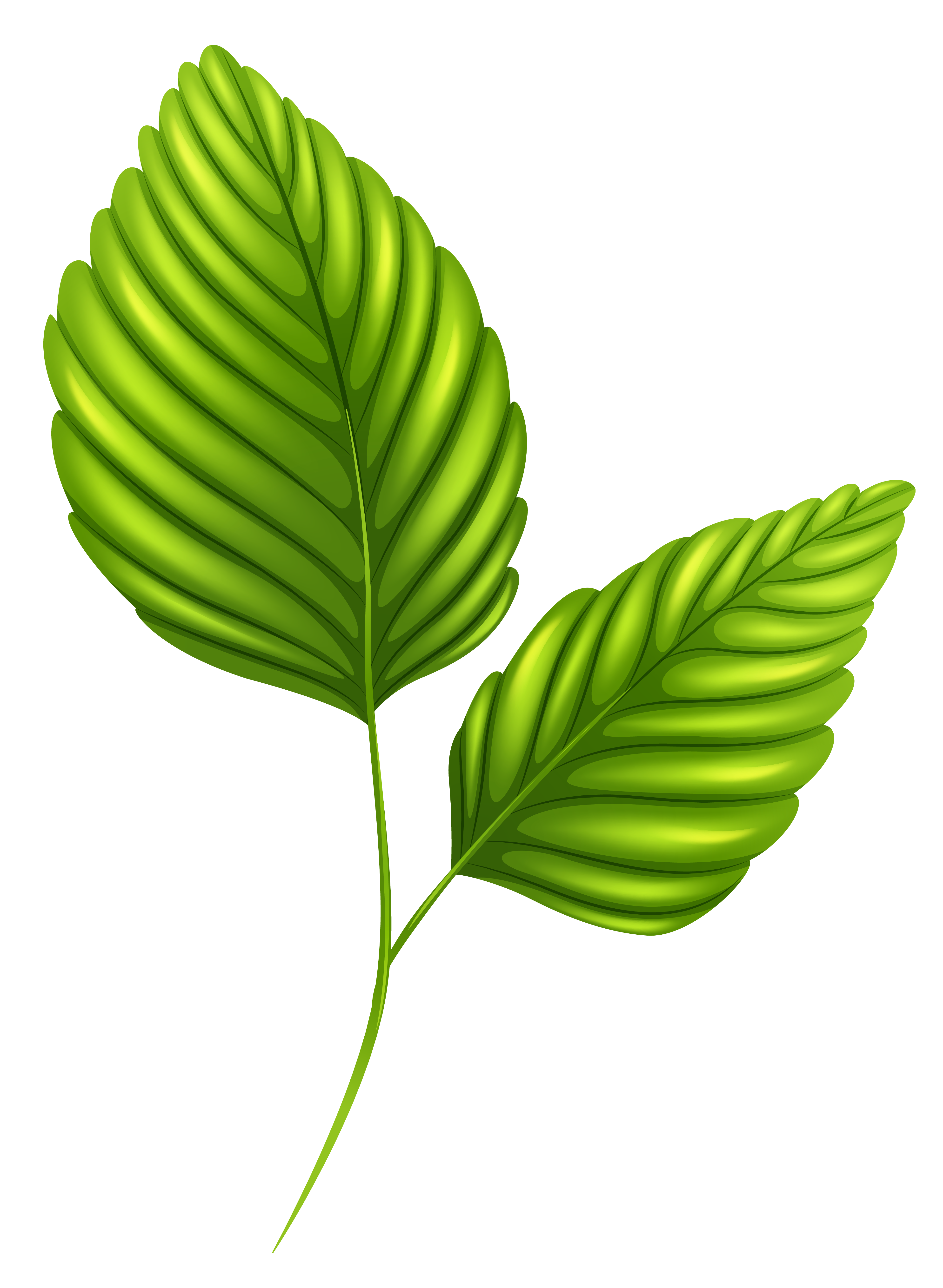 Two Green Leaves PNG Clipart Image.