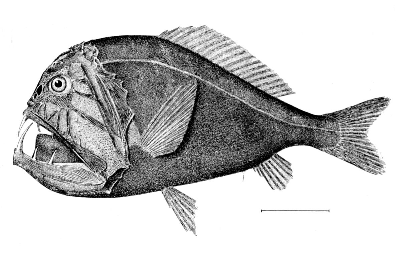Deep sea creature.