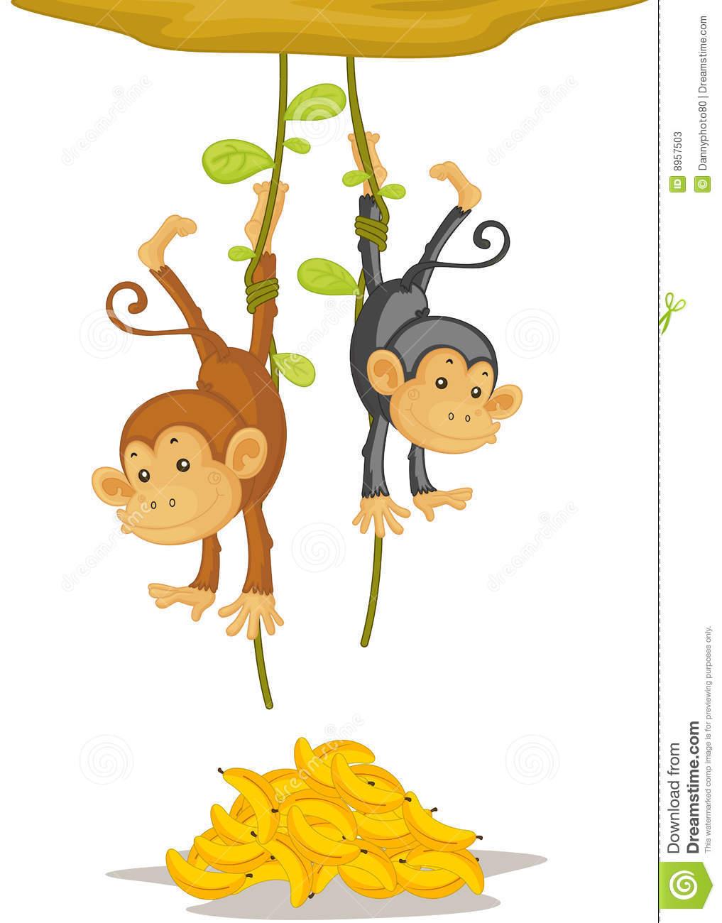 Two Monkeys Stock Photos.