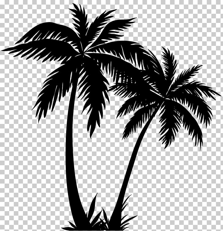 Arecaceae Silhouette , palm tree, silhouette of two coconut.