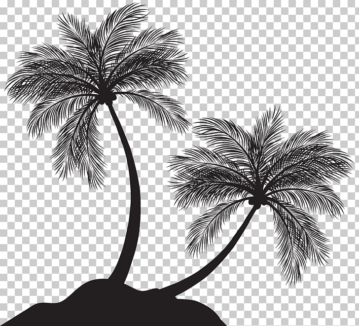 Arecaceae Silhouette , Two Palm Trees Silhouette.
