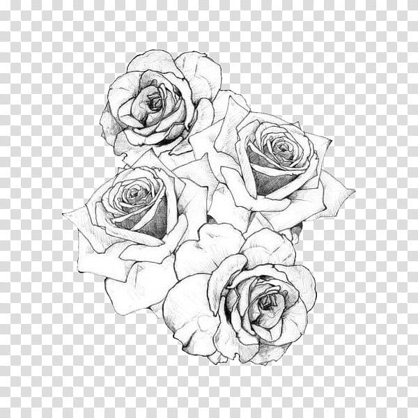 BLACK AND WHITE S, roses sketch transparent background PNG.
