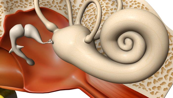 Tympanic Membrane (Ear Drum) Perforations.